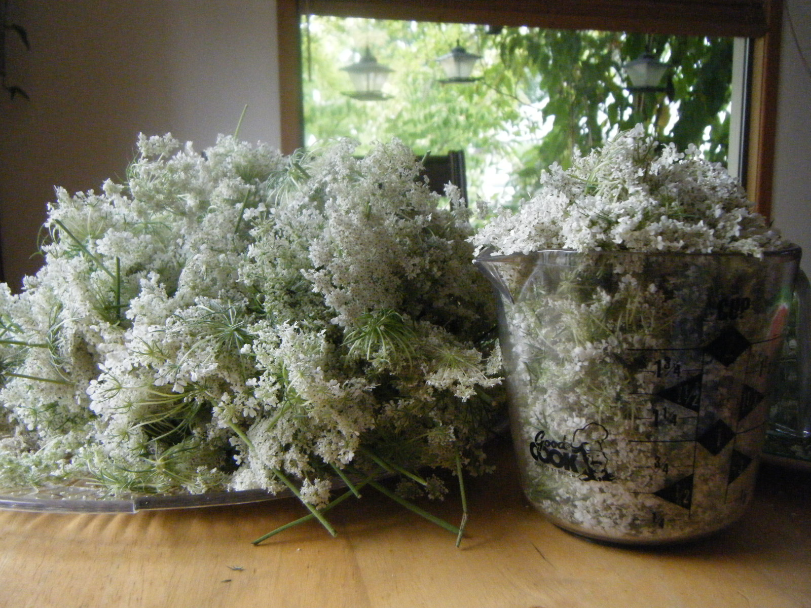 Queen Anne's Lace Flower Jelly